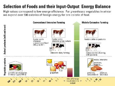 "Fig. 24: Food can ""eat"" a lot of energy, — but need not."